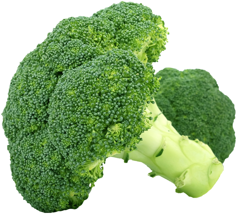 ブロッコリー 新鮮 緑 野菜