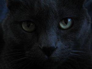 brackcat-eyes