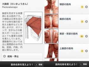 kinnniku-meisyou-wo-oboeyou-app