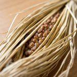 筋トレに納豆がいいって本当?!食べることで筋肉がつく仕組みを解説