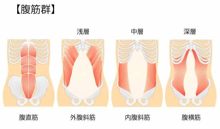 タッククランチで鍛えられる腹筋の図解